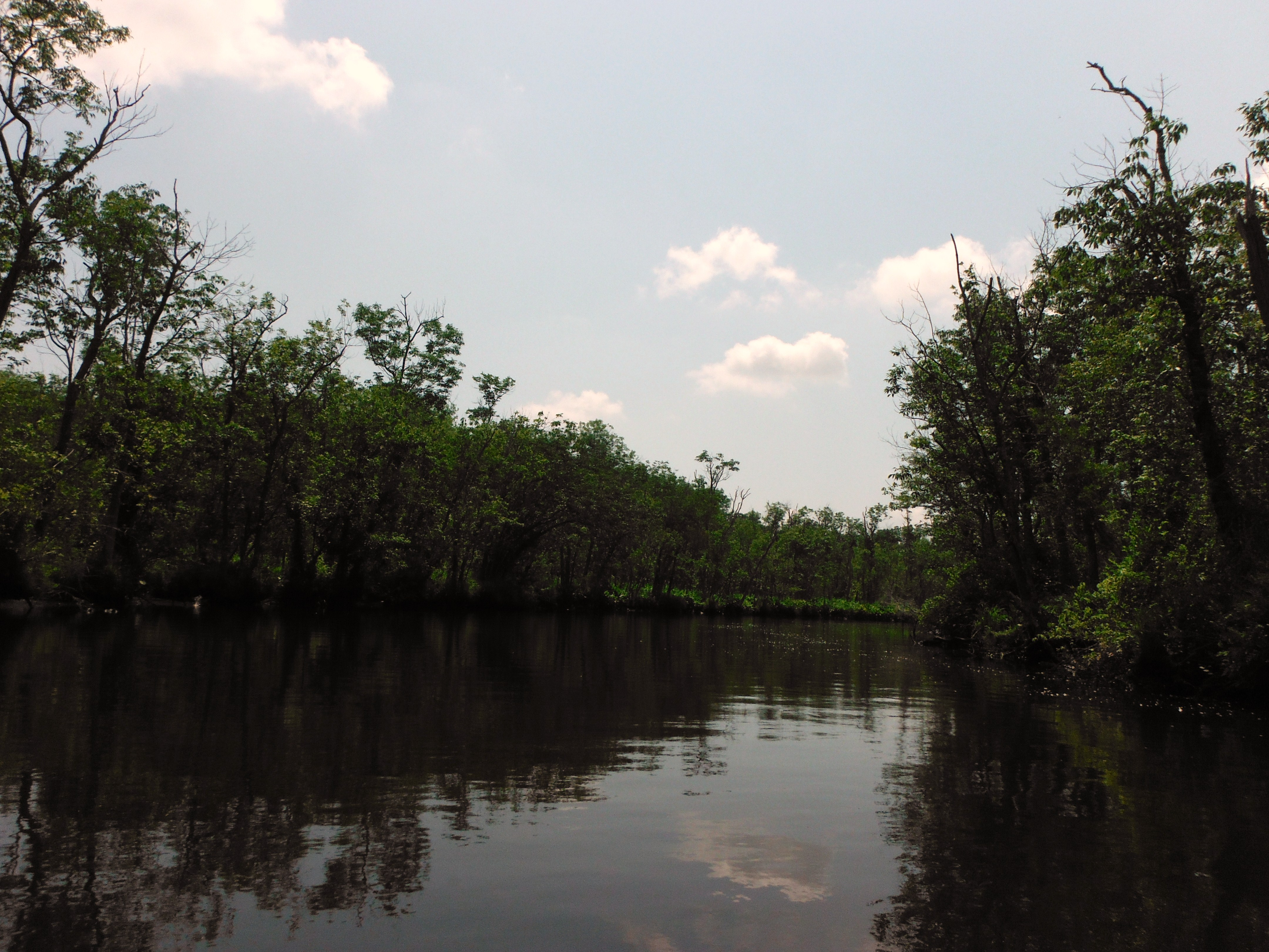 The Chicone paddle is very calm, once you enter the creek.