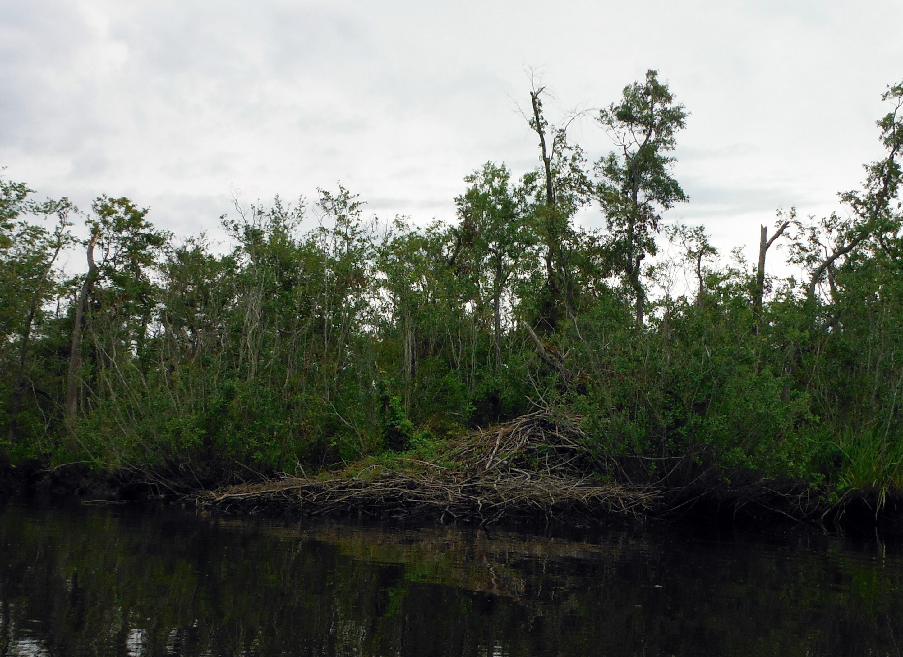 The bank along Barren Creek.