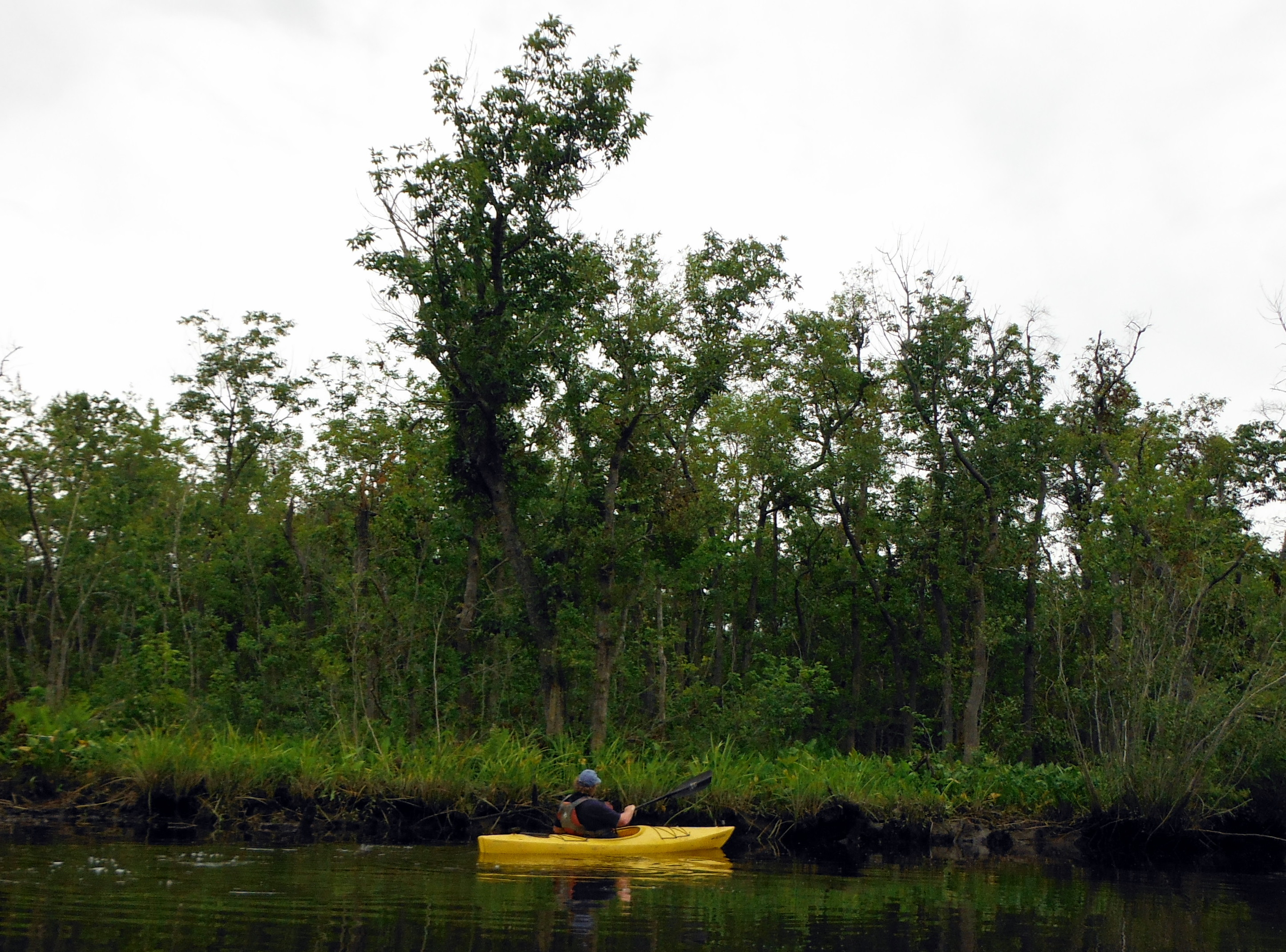 A paddler exploring Barren Creek.