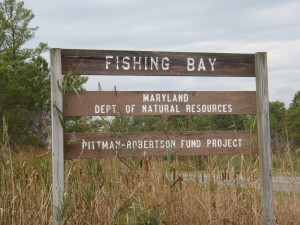 Bestpitch is part of the Fishing Bay Wildlife Management Area.