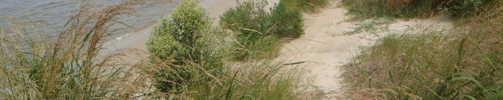 The shoreline at Cedar Hill Marina