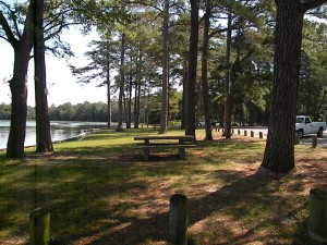 Picnic tables are placed along the bank