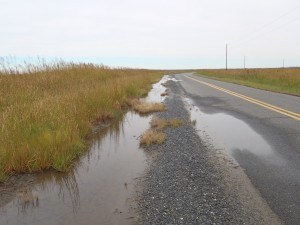 The only parking at Elliott Island Road is a widened shoulder area. The area may flood at high tide or after heavy rains.